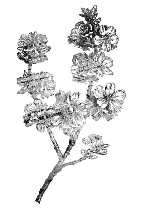 Black and white drawing of the paper flowers clipart