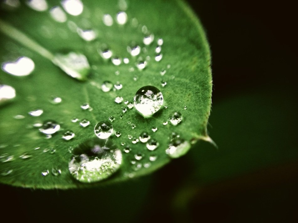 big and small drops of dew on a green leaf