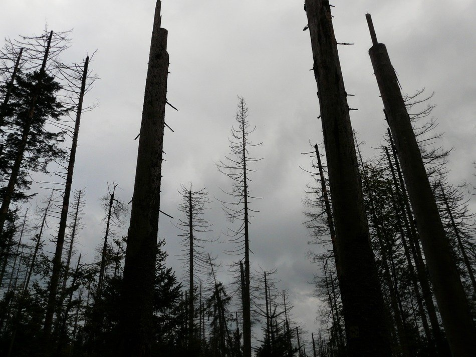 dead forest under a cloudy sky