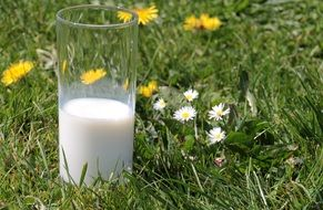 glass with milk on green grass