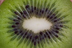 middle of a kiwi close-up