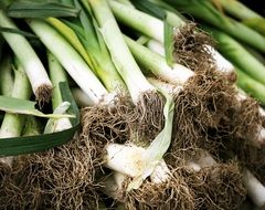 Leeks Green Roots