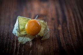 orange Physalis natural product