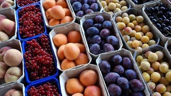 multicolored ripe berries and fruits in the market