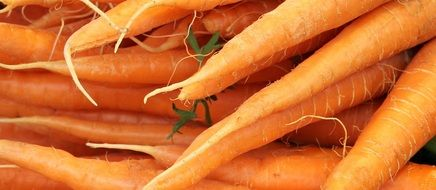 carrots in the vegetable market