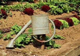 watering the garden from a watering can