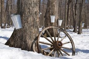 containers for collecting maple syrup