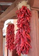 Chilli peppers in New Mexico