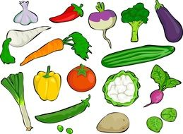 variety of colorful vegetables in the picture