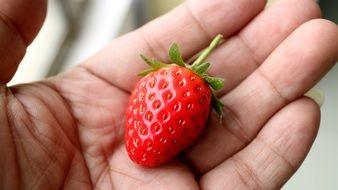 strawberry in man\'s hand
