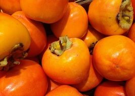 harvest of orange persimmon