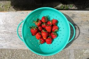 ripe red strawberries in a green colander