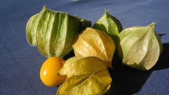 Yellow cape gooseberry fruit has sweet taste