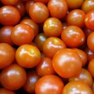 Fresh organic healthy tasty red tomatoes