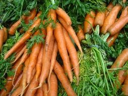 A lot of the organic carrots