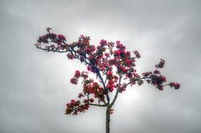 beautiful flowering tree on a background of gray sky