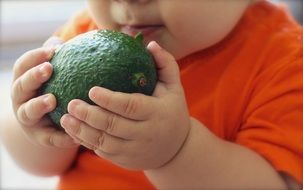 Avocado in Baby hands