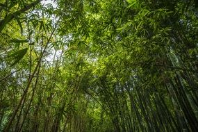 bamboo forest green foliage plant