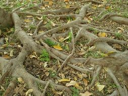 twisted roots of an old tree
