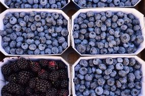 Berries Blueberries Blackberries market