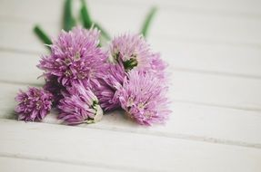 flowering tasty chives