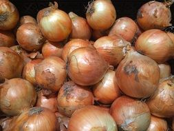 Onions Pile