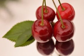 Red sweet ripe delicious cherries with the leaves