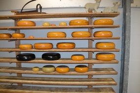 mature cheese on the shelves