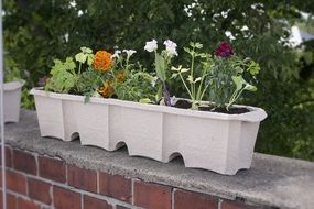 balcony box with flowers