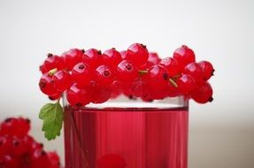 red currant fruit drink