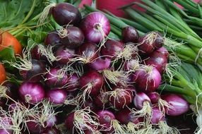 red onion harvest in the market