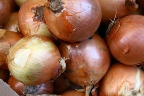 onions for sale in the local market