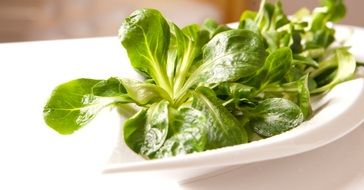 fresh green salad in a white plate