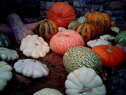pumpkins of different shapes and colors