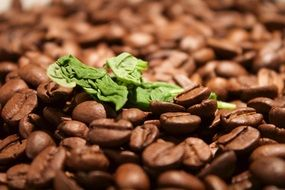 Basil Coffee