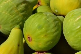 Ripe green sweet figs