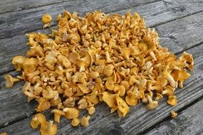 Chanterelles Mushrooms Collect
