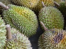 Durian Fruit in asia closeup