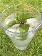 Mojito Cocktail with Mint leaves in glass on grass