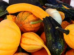 pumpkins and gourds in autumn