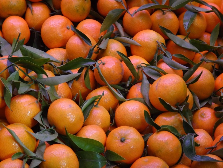 many tangerines with green leaves