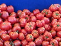 pink tomatoes in a blue box