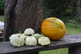 patison and yellow pumpkin on a wooden bench