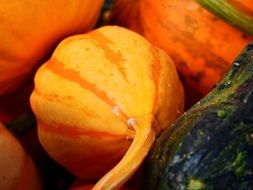 pumpkins and gourds for thanksgiving
