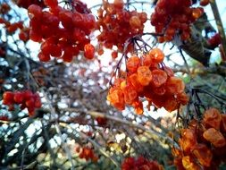 dry berries on a tree branch
