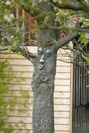 Face on the tree in the original garden Original Garden