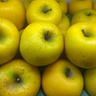 a lot of yellow apple lie in a pile
