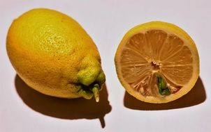 Lemon sprout inside cut fruit