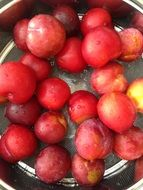 red plums in a bowl