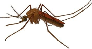 brown mosquito as a graphic image